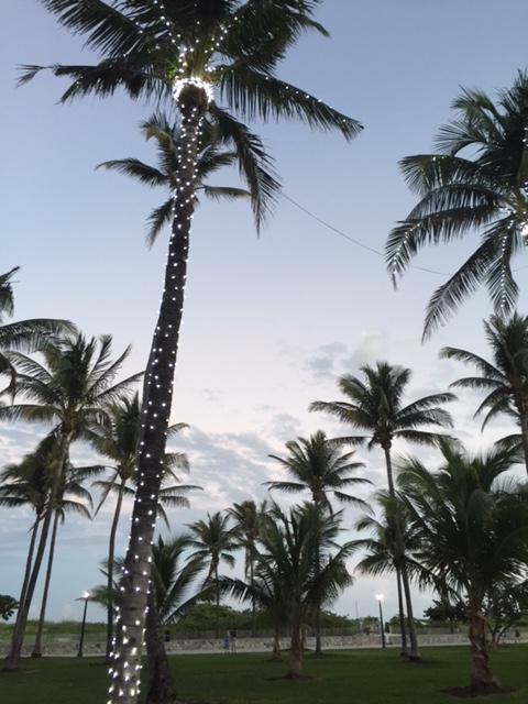 Palm Tree Christmas lights