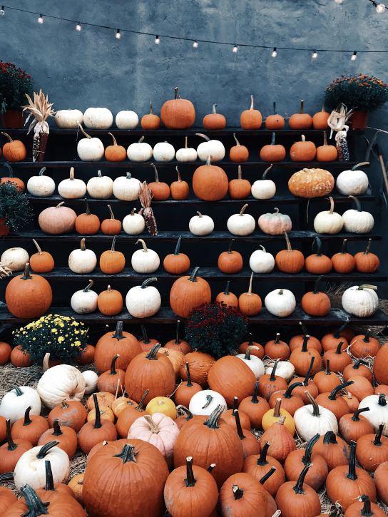 innerbloom_pumpkins